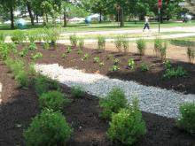 Rain garden retains storm water until it can gradually flow to water table.
