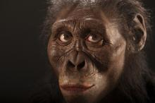 A lifelike reconstruction of Lucy, the 3.2 million-year-old human ancestor of the species Australopithecus afarensis