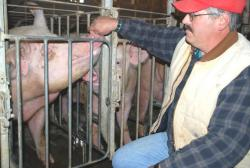 Dave Shoup and a member of his swine herd