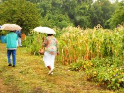 Visitors put up with the rain to tour Regents Community Garden in Cleveland (pic by Brian Bull).