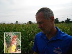 Farmer Jack Groselle examines a stunted, scaly ear of corn that was affected by the drought (pic by Brian Bull).