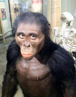 New lifelike reproduction of Lucy, unveiled Friday