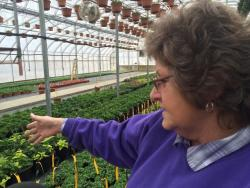 Manager Cathee Thomas gives a tour of a greenhouse. (Tony Ganzer/WCPN)