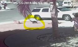 A cat breaks up a dog's attack against a boy in a viral video from California posted this week (screen grab)