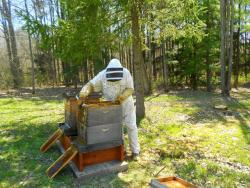 Joel Leachko checks on his bees near Hiram, Ohio (photo by Brian Bull)