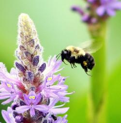 A bee in Punderson State Park (photo by Brian Bull)