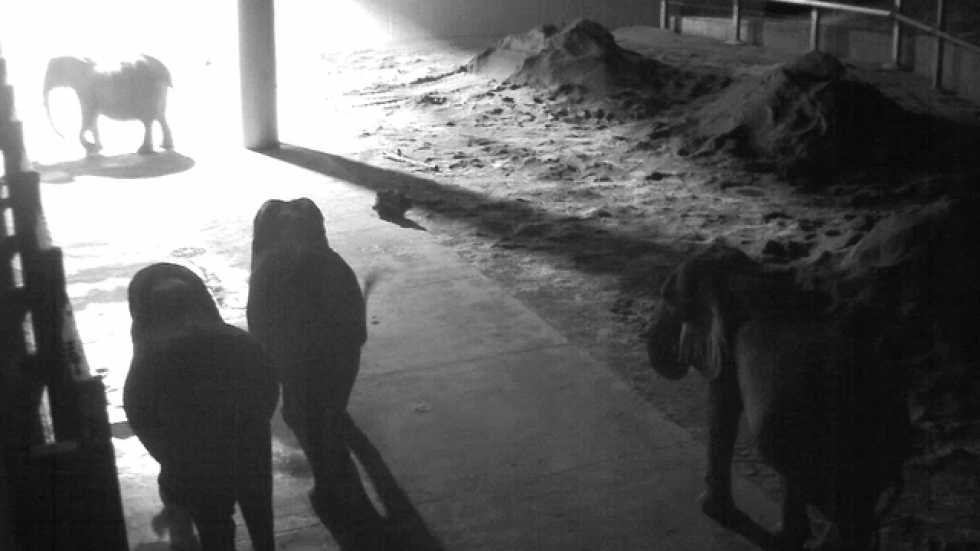 Night footage of elephants at the Cleveland Metroparks Zoo.