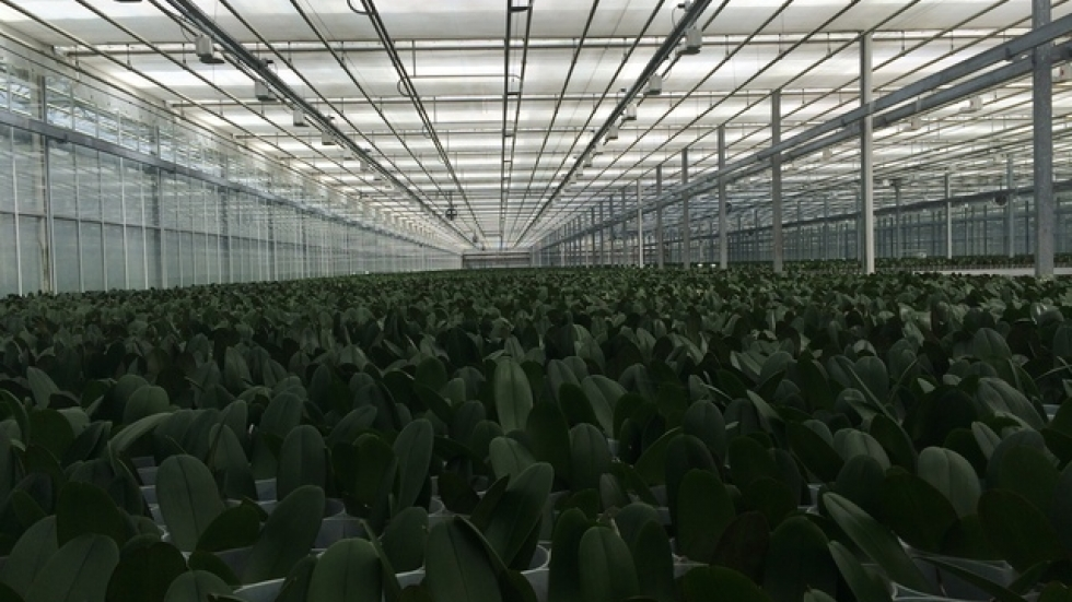 Acres of orchids at various steps in their lifecycle. Each greenhouse has varied climate conditions. (Tony Ganzer/WCPN)