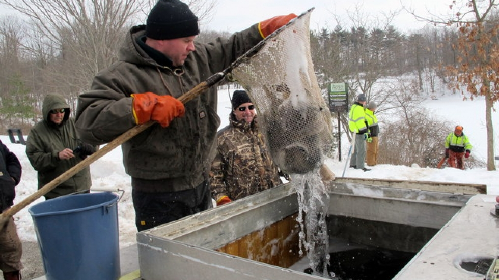 A MetroParks employee lifts out trout from a tanker truck (pic: Brian Bull)