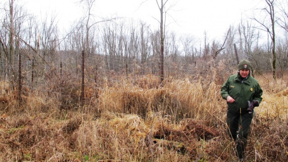 A fenced off area of the park shows what vegetation would be like with less browsing deer (pic: Brian Bull)