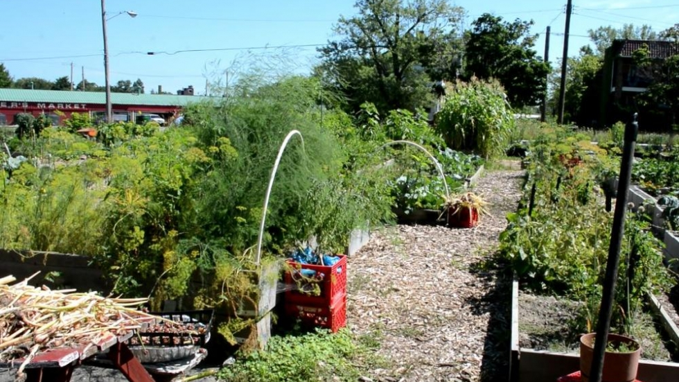 Residents raised a community garden from what was once an asphalt lot.