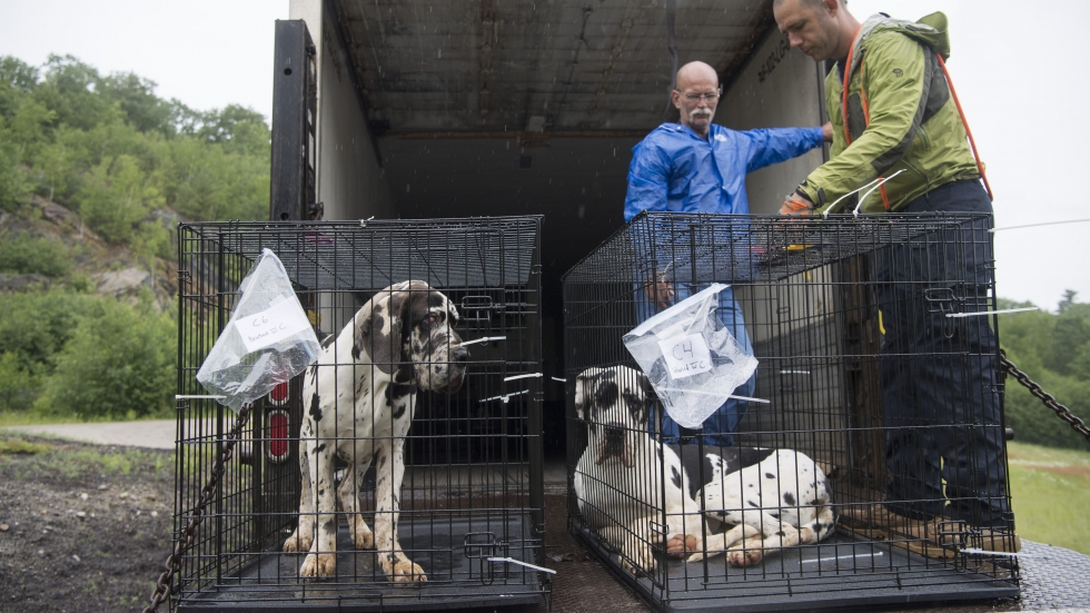 Canine CSI: Ohio Law Enforcement Trained On Animal Cruelty Cases