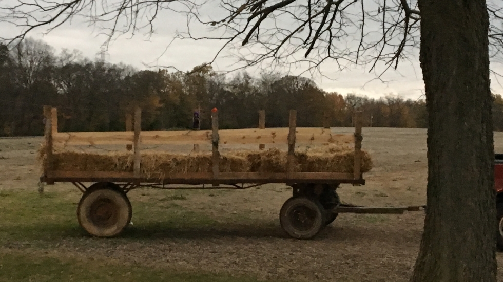 Wagon hitched for a hayride