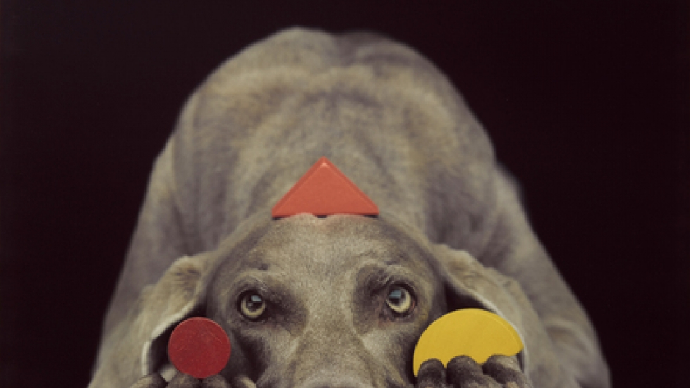 William Wegman, Basic Shapes in Color, 1994, color Polaroid, 24 x 20 in., courtesy of the artist.