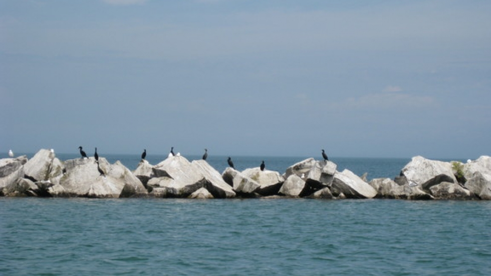 Just a couple of Cormorants and Seagulls