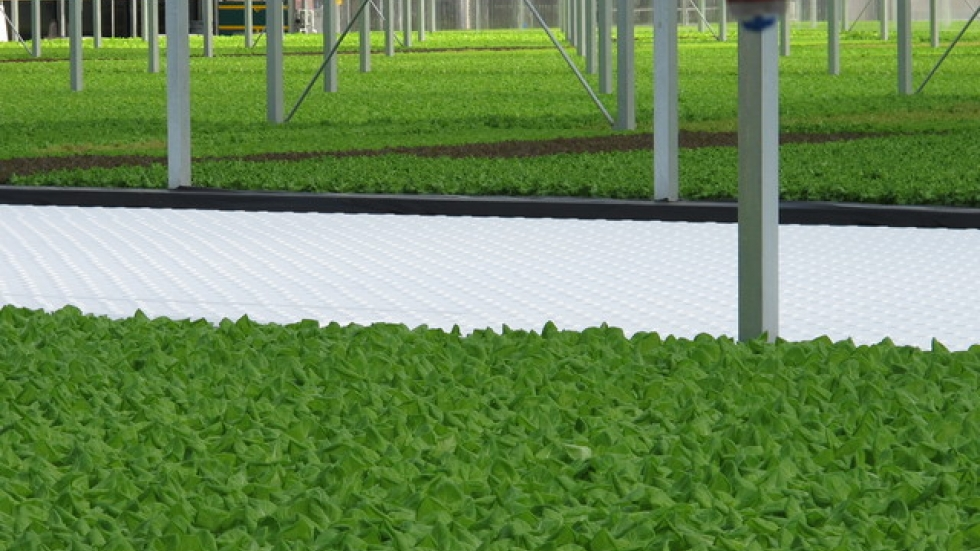 It takes 35 days to grow lettuce from seed to market size.