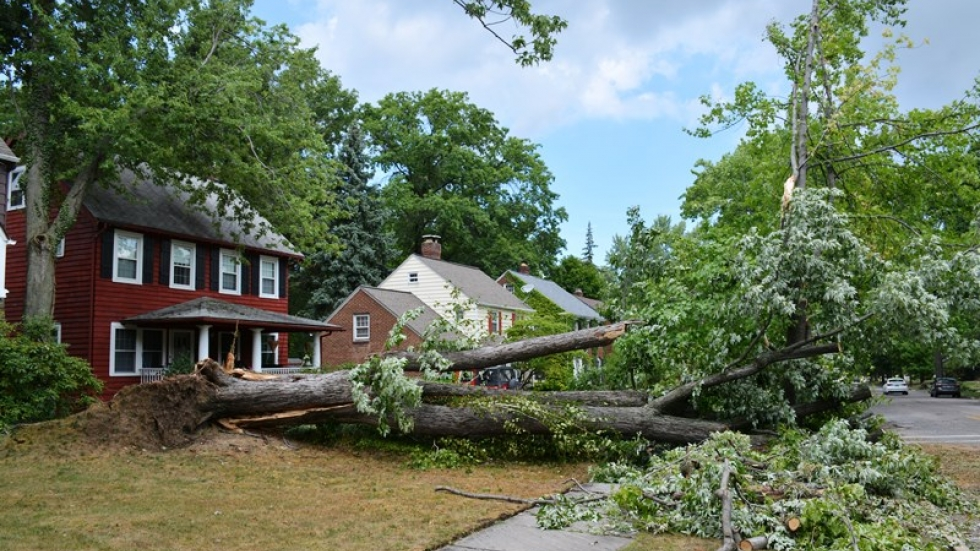 A downed tree lies across a yard in Cleveland Heights.