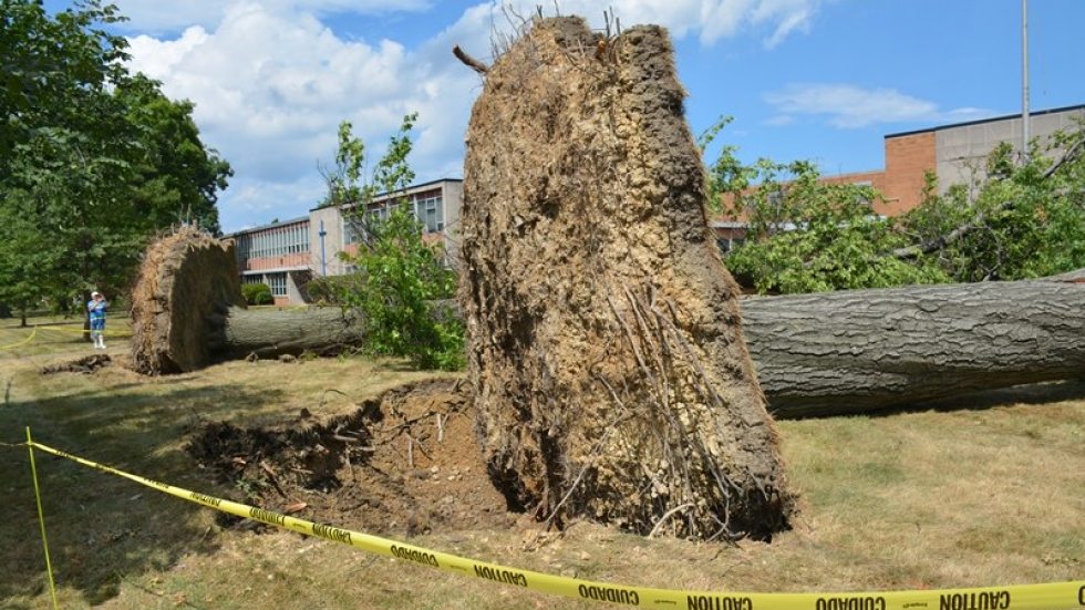 The storm knocked over trees on the campus of Lutheran East High School.