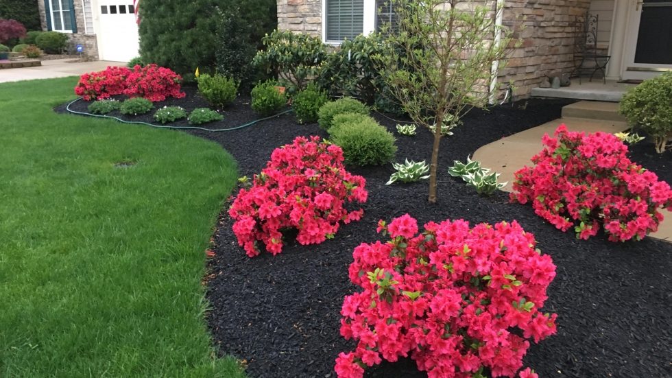 Plants Are Social So Why Do We Surround Them With Mulch News
