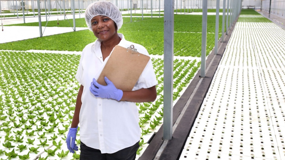 A worker at Green City Growers stands next to a hydroponic field of lettuce inside a greenhouse