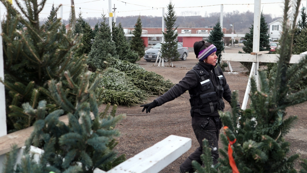 A woman wearing a headband and a black winter jacket is standing in a dirt lot, surrounded by rows of Christmas trees.