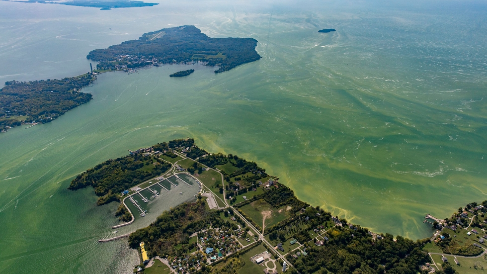 An aerial view of harmful algal blooms in the western Lake Erie. A peninsula juts out into the lake, surrounded by bright green, cloudy water.