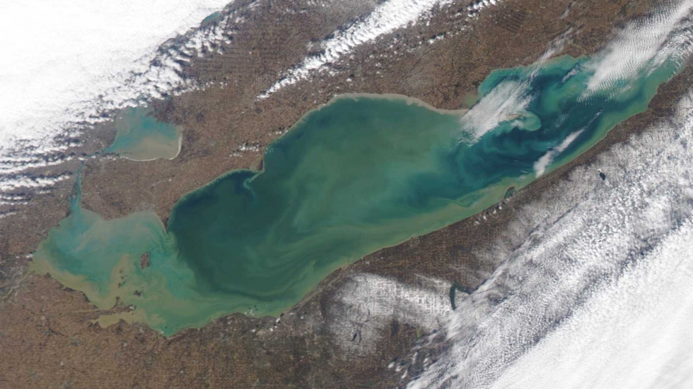 A satellite image showing algal blooms in Lake Erie in August 2014.