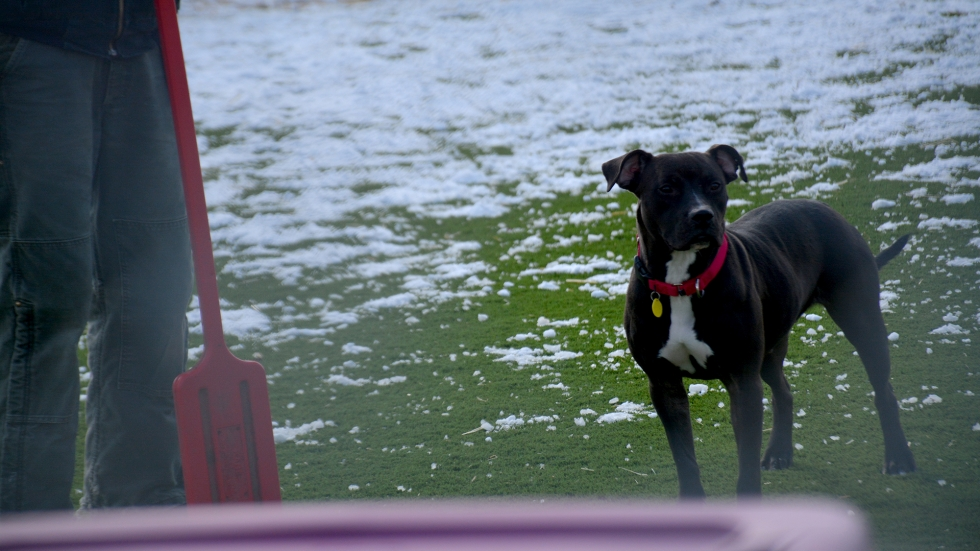A dog stands in the play field at the new Cleveland Kennel.