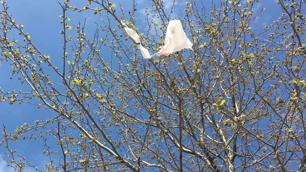 picture of plastic bag in tree