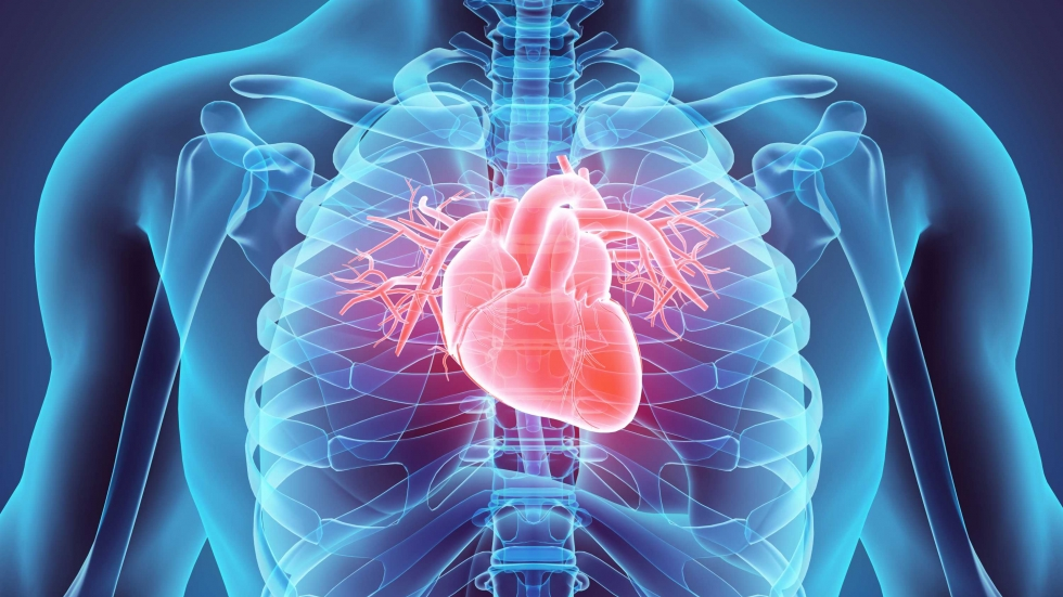 Graphic of heart in body