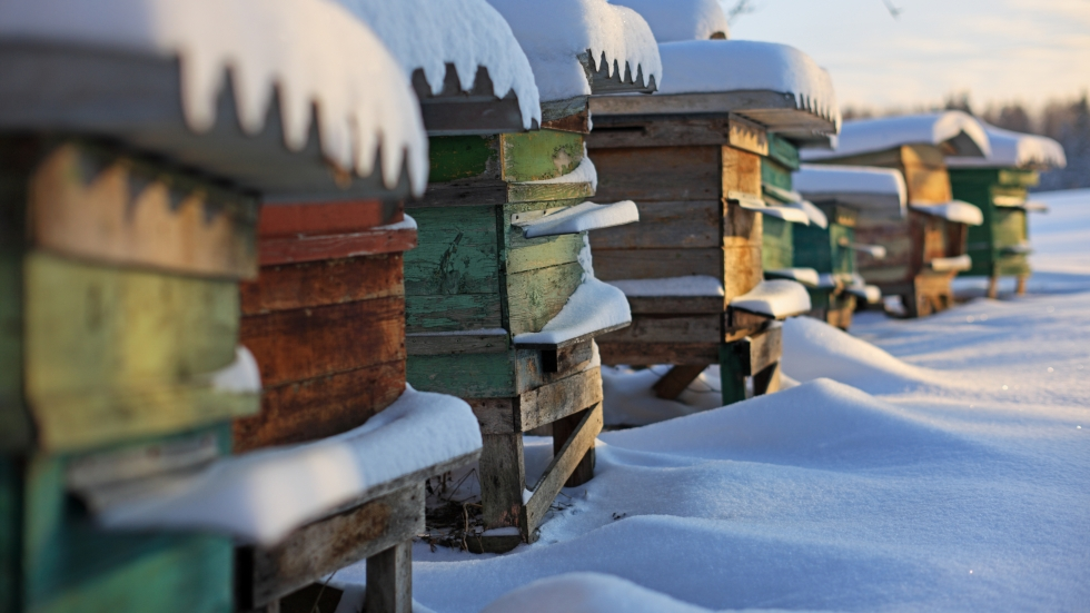 photo of beehives in winter [Shutterstock]