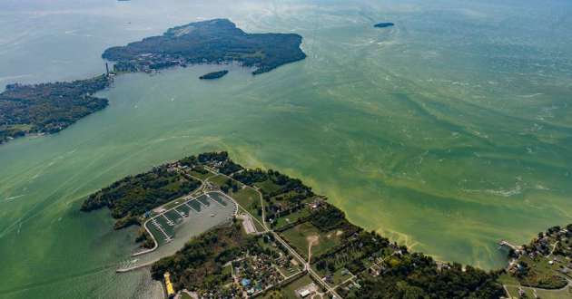 An aerial view of harmful algal blooms in the western portion of Lake Erie in September 2017.