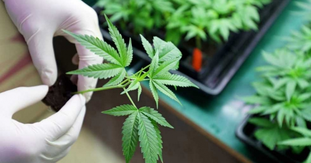 The new legislation removes jailtime and fines for possession of up to 200 grams of marijuana.