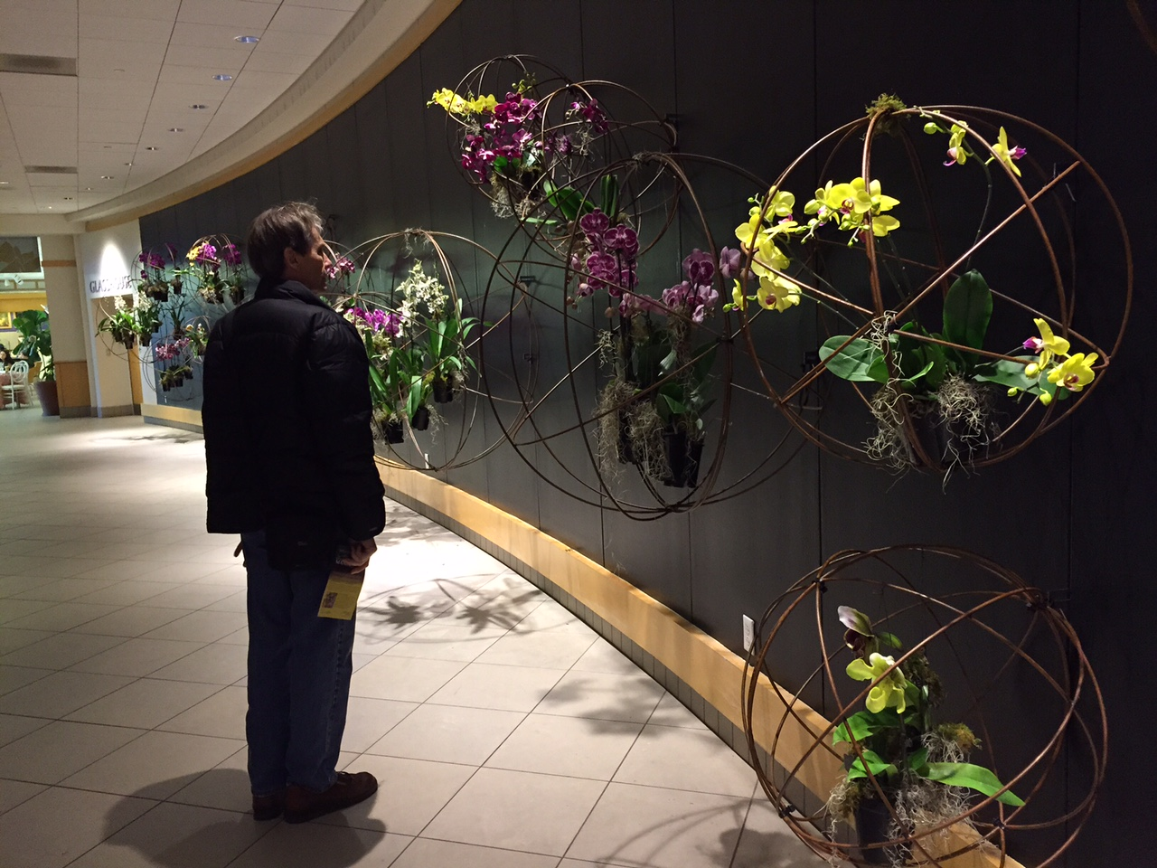 Botanical Garden Expands On Popularity Of Orchids Arts Culture