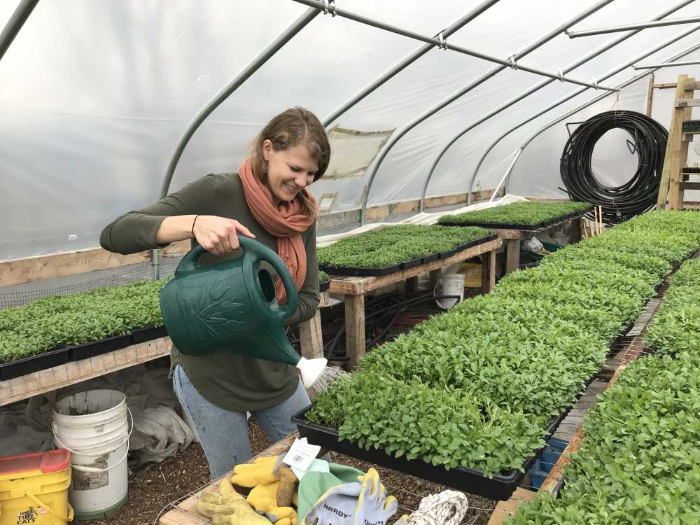Cleveland Seed Bank's Kimmie Lessman waters trays of indigo seedlings at a hoop house in Cleveland's Stockyards neighborhood. They were transplanted a month later in May into Praxis Fiber Workshop's natural dye garden [Amy Eddings / ideastream]s natural dye garden