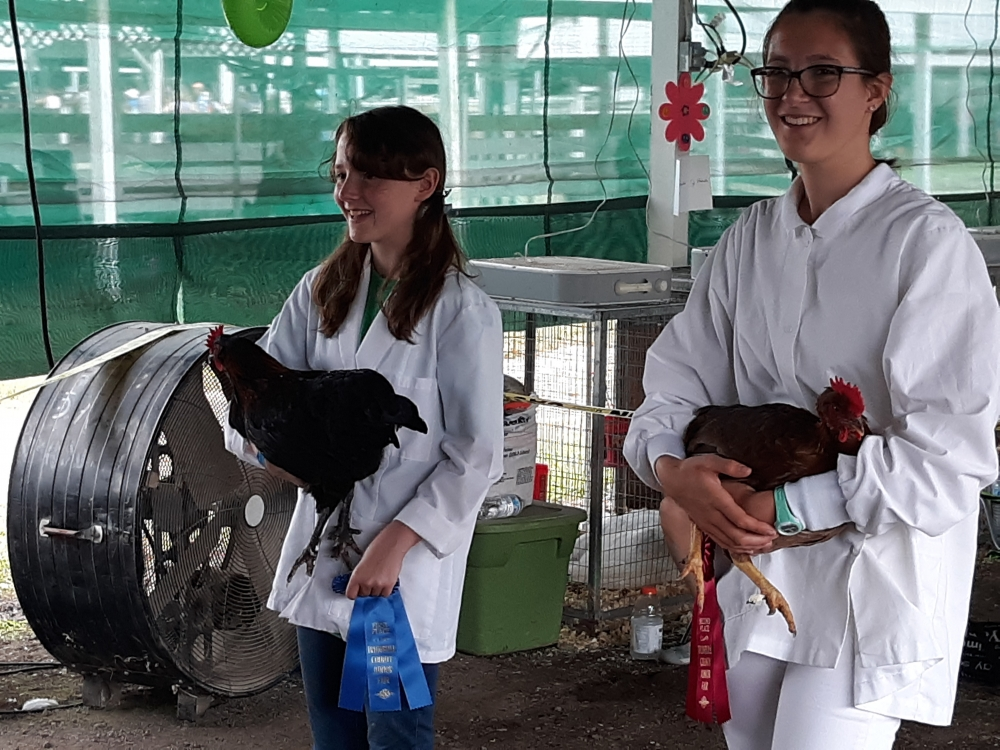 photo of two 4 H members holding award winning roosters at Trumbull County Fair [Josie Wagner]