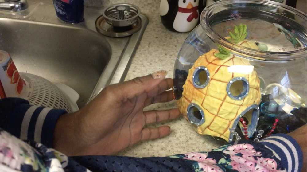 A goldfish swims in a fishbowl.