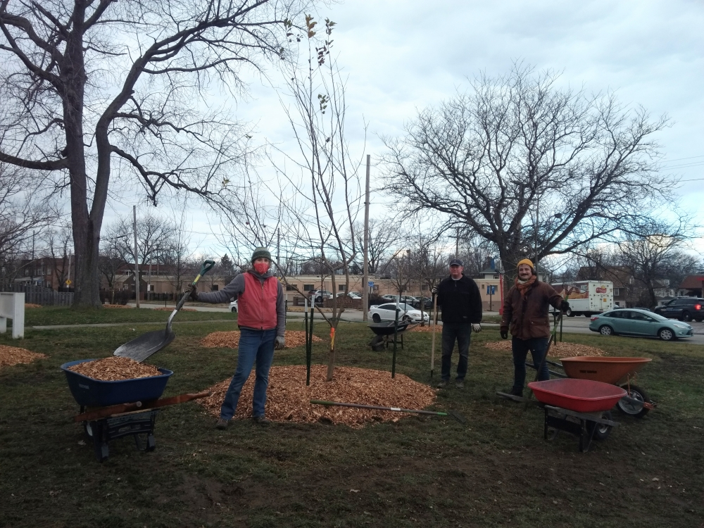 Eight of Cudell Orchard's trees were transplanted to a new site in the neighborhood.