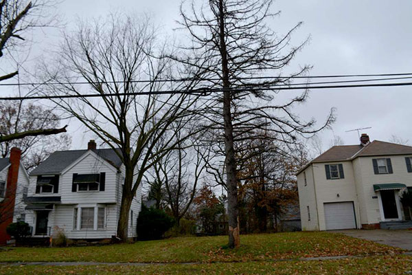 A tree stands in a vacant lot between two houses in Cleveland Heights